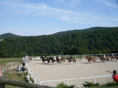 Koňský program naBradáčově dvoře